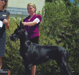 Best Junior Handler Victoria Cornish Great Dane