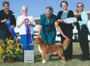 BEST IN SHOW Group 1, Sporting CH Fionavar Javahill Topgun CD Nova Scotia Duck Tolling Retriever