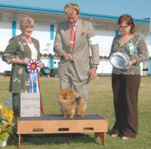 BEST IN SHOW Group 1, Toy CH Cr Tuff Guy Of Isabella  Pomeranian