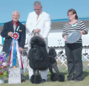 BEST IN SHOW Group 1, Non-Sporting CH Randenn Tristar Affirmation  Standard Poodle