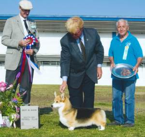 BEST IN SHOW Group 1, Herding CH Maplecreek Back In Black  Pembroke Welsh Corgi