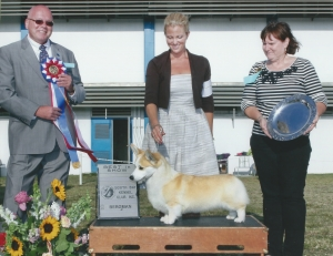 Best In Show GCH CH Segni At Coventry  Pembroke Welsh Corgi