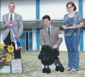 Best In Show Group 1, Non-Sporting GCH CH Danfour Debutante  Miniature Poodle