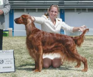 Best Junior Handler Harlie King Irish Setter
