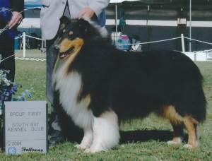 Group 1, Herding CH Stirling Society Outstandish   Rough Collie