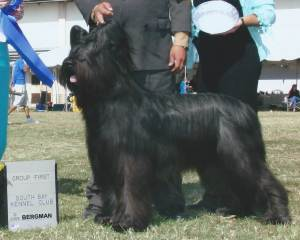 Group 1, Herding CH Briardale Uss Boston Terroir  Briard