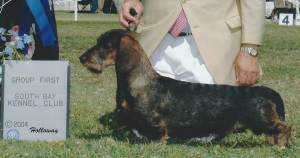 Group 1, Hound CH J Luvs Schoolhouse Doodlebug  Dachshund (Wirehaired)