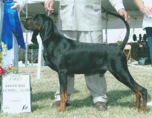 Group 1, Hound CH Southchases Brave Heart  Black and Tan Coonhound