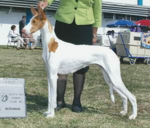 Group 1, Hound GCH CH Harehill's Ace In The Hole  Ibizan Hound