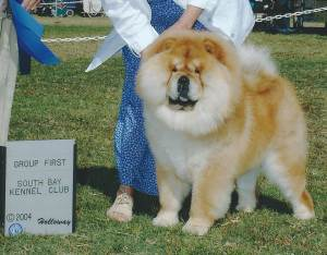 Group 1, Non-Sporting CH Imagine I Love Jazz  Chow Chow
