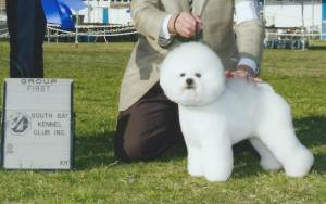 Group 1, Non-Sporting CH Mybliss Petite Coquette  Bichon Frise