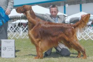 Group 1, Sporting CH Marlyn All About Magic  Irish Setter