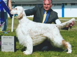 Group 1, Sporting CH Artizoe High Caliber  English Setter