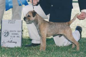 Group 1, Terrier CH Otleys English Gent  Border Terrier