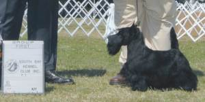 Group 1, Terrier CH Roundtown Mercedes Of Maryscot  Scottish Terrier