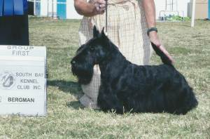 Group 1, Terrier CH Jacglen's Forever Present  Scottish Terrier