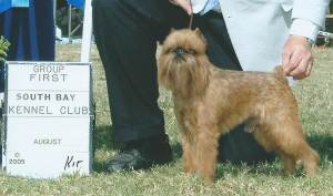 Group 1, Toy CH White Oaks MR. Muggles  Brussels Griffon