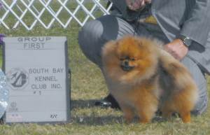 Group 1, Toy CH Cr Tuff Guy Of Isabella  Pomeranian