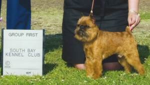 Group 1, Toy CH Cashin's Walk The Line  Brussels Griffon