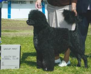 Group 1, Working CH Aviators Luck Be A Lady  Portuguese Water Dog
