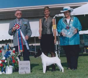BEST IN SHOW Group 1, Terrier CH Broxden Rio Oso Best Dressed  Smooth Fox Terrier