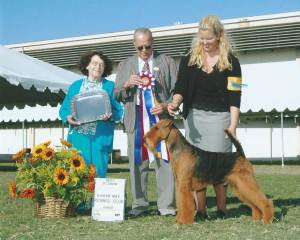 BEST IN SHOW Group 1, Terrier CH Evermay's High Performance  Airedale Terrier