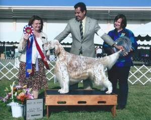 BEST IN SHOW Group 1, Sporting CH Stagedoor Rock It Man  English Setter