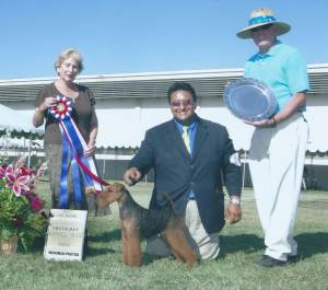 BEST IN SHOW Group 1, Terrier  CH Seebest Celtic Black Knight  Welsh Terrier