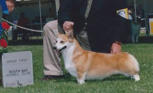 Group 1, Herding CH Coventry Lady Godiva  Pembroke Welsh Corgi