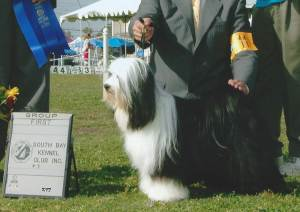 Group 1, Non-Sporting CH Players Prodigy  Tibetan Terrier