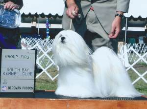 Group 1, Non-Sporting CH Sharles The Hacker  Lhasa Apso