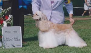 Group 1, Sporting CH Beechwood's Starlight Express  Cocker Spaniel ASCOB