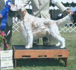 Group 1, Sporting CH Stagedoor Rock It Man  English Setter