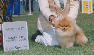 Group 1, Toy CH Sirius It's All About Me  Pomeranian