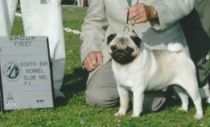Group 1, Toy CH Blaque Flying Aces Of Nirvana  Pug
