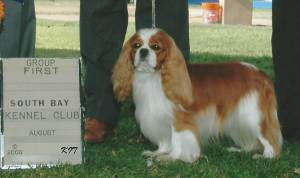 Group 1, Toy CH Turretbank Lewis  Cavalier King Charles Spaniel