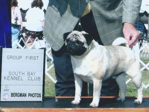 Group 1, Toy CH Witherford Daiquiri  Pug