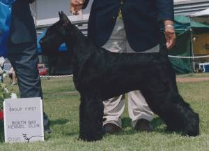 Group 1, Working CH Lowdown Jacqui Frazier-Lyde  Giant Schnauzer
