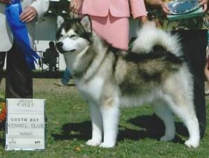 Group 1, Working CH Catanya's Who's Your Daddy?  Alaskan Malamute