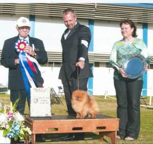 BEST IN SHOW Group 1, Toy GCH Cr Simply Irresistible Pomeranian
