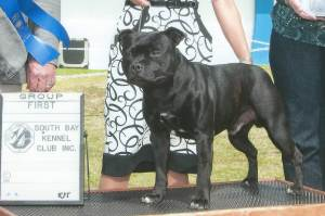 Group 1, Terrier GCH CH Angranian Derry Mucker Staffordshire Bull Terrier